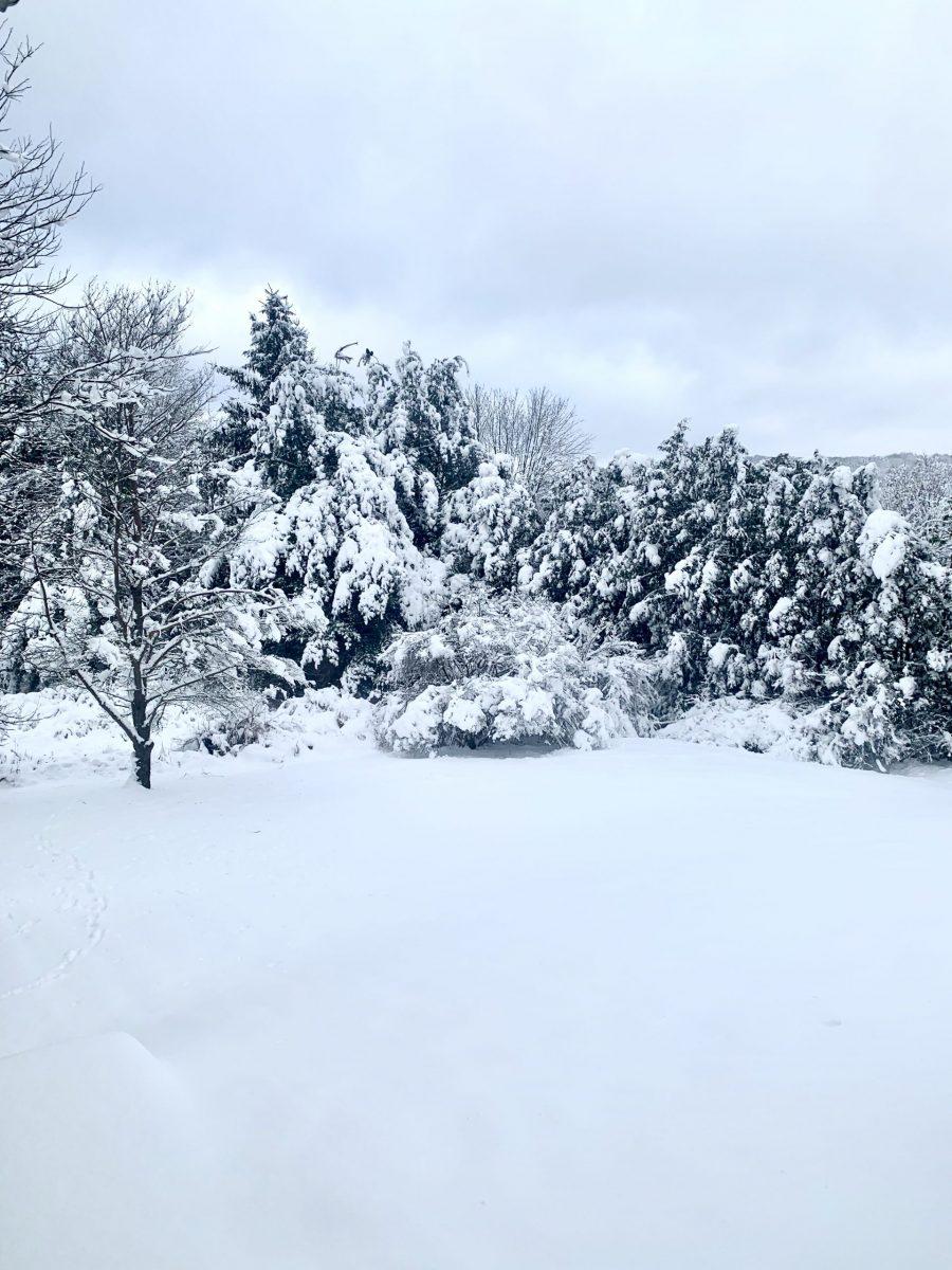 Melissa's upstate NY backyard in winter